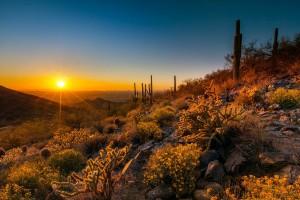 sun setting over the desert